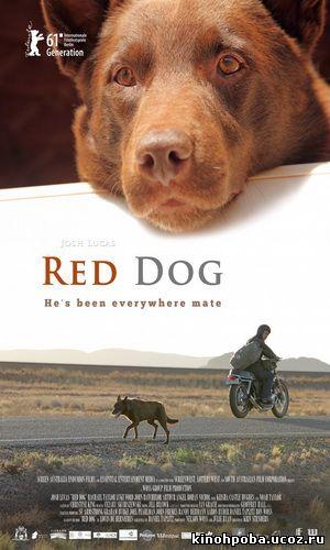 Рыжий пес / Red Dog